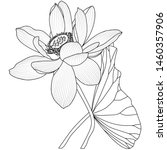 vector hand drawn lotus flowers ... | Shutterstock .eps vector #1460357906