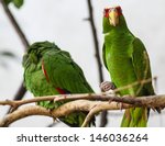 Small photo of Green Parrot (Amazona albifrons) sitting in a tree