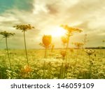 Stock photo golden evening on the summer meadow natural landscape 146059109