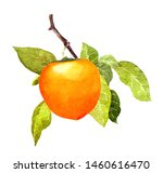 Persimmon Fruit On Branch With...