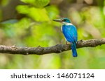 collared kingfisher ... | Shutterstock . vector #146071124