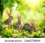 Stock photo rabbits beauty art design of cute little easter bunny in the meadow spring flowers and green 146078894