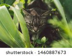 Tabby Cat Hiding In The Grass...