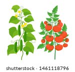 tomato and cucumber plant.... | Shutterstock .eps vector #1461118796
