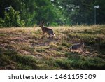 Stock photo hares on field in sunshine 1461159509