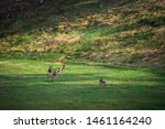 Stock photo hares running on field in sweden 1461164240