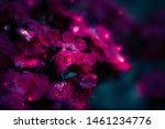 Magical Purple Flowers In Nigh...