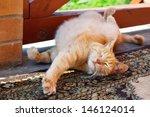 Stock photo cute red cat scratching himself 146124014