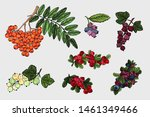 berries collection. colorful...   Shutterstock .eps vector #1461349466