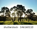 Pasture And Backlit Trees In...