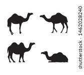 Camel Illustration Animal. Eid...