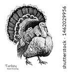 Big Turkey Bird Black Pen Hand...