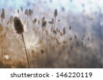 autumn thistle in a white... | Shutterstock . vector #146220119