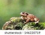 Common Toad  Bufo Bufo  Single...