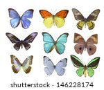 butterfly on white | Shutterstock . vector #146228174