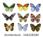 butterfly on white | Shutterstock . vector #146228180
