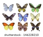 butterfly on white | Shutterstock . vector #146228210
