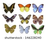 butterfly on white | Shutterstock . vector #146228240