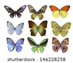 butterfly on white | Shutterstock . vector #146228258