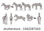 Set Of African Zebra Side And...