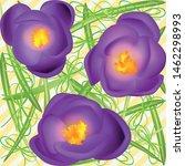 crocuses. crocus. beautiful... | Shutterstock .eps vector #1462298993