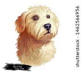 Glen Of Imaal Terrier Dog Puppy ...