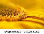 Super Macro Yellow Flower...