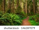 Giant Trees And A Hiking Path...
