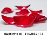 Stock photo close up of red rose petals wilted on a white background seven petals of red rose petals red rose 1462881443