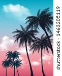 Summer Sunset Palm Trees....