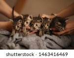 Stock photo brood of little cute kittens on blanket care in animal shelter 1463416469