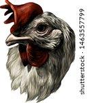 Cock Head   Sketch Vector...