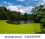 Green Pond Full Of Alga  Czech...
