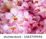 Pink Orchid Flowers Group ...