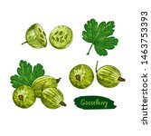 gooseberry hand drawn colorful... | Shutterstock .eps vector #1463753393