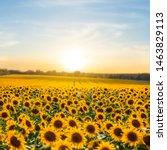 Beautiful Summer Sunflower...