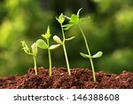 plant growth  | Shutterstock . vector #146388608