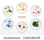 Set Of Isolated Mold Fungus...