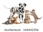 Stock photo pets animals group collage for veterinary or petshop isolated 146442356