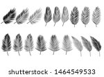 coconut leaf silhouette or set... | Shutterstock .eps vector #1464549533