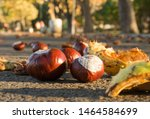 Chestnuts On The Ground. Bitte...