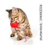 Stock photo cute little months old kitten carrying a wool ball studio shot 146462216