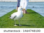 White Seagull Standing On The...