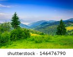 two green pine tree and bush on a green meadow in the mountains in the early morning under a clear blue sky - stock photo