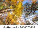 Amazing Autumn Leaf Color...