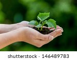 Woman Keeps Plant In Hand....
