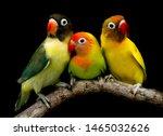 Many Beautiful Parrots Are Very ...