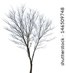 tree isolated against a white... | Shutterstock . vector #146509748