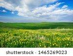 Beautiful summer landscape, yellow flower field on the hills - stock photo