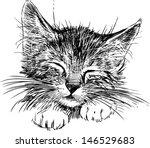 Stock vector sleeping cat 146529683